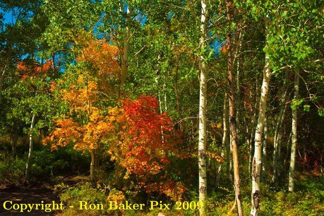 Utah Fall Foliage